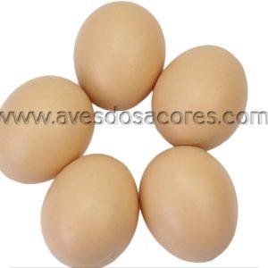 Pack de 5 ovos de plástico